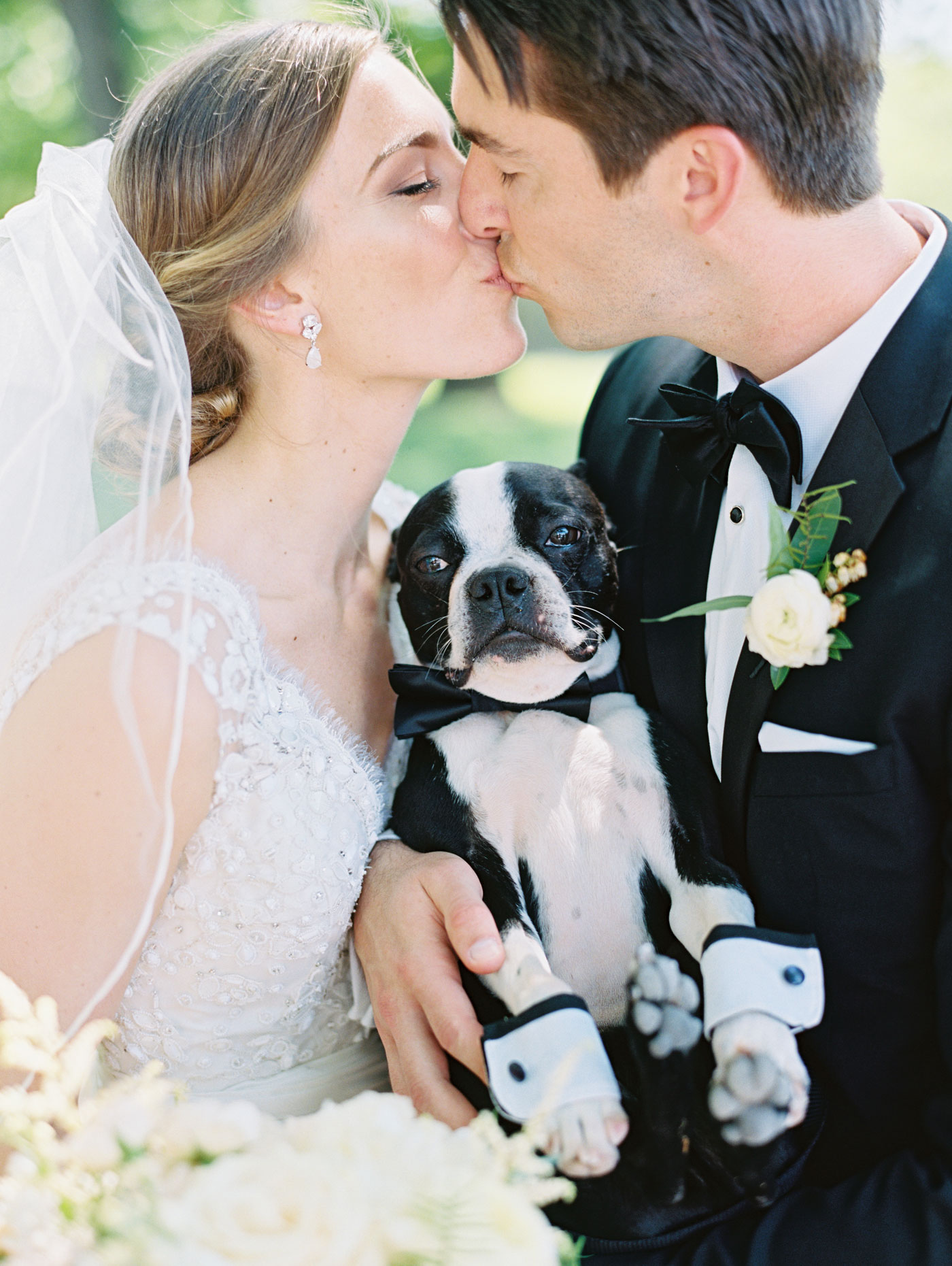 boston terrier wedding kiss